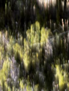 My New Collection is Photography Abstracts